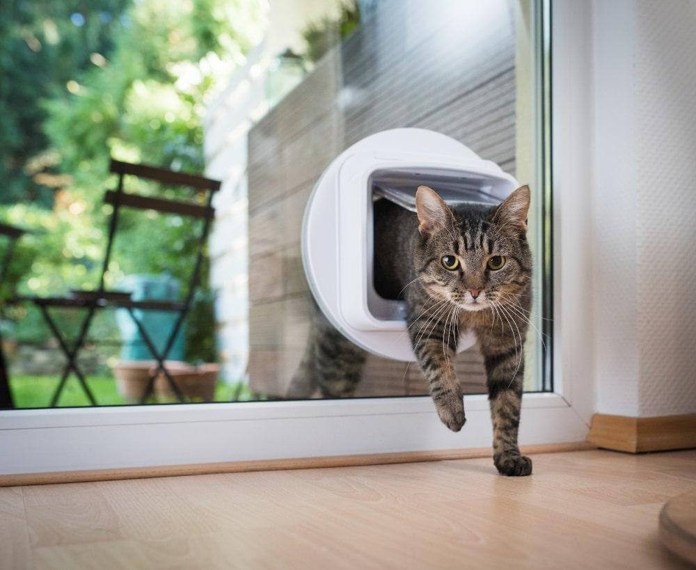 Cat flap fitter Stoke on Trent