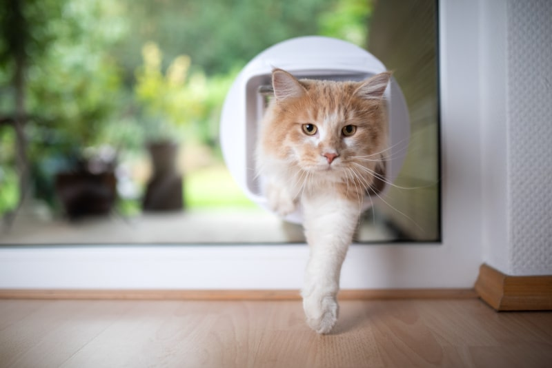 Cat flap fitter Newcastle Under Lyme